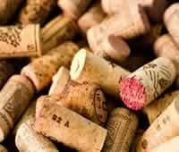 WineTube EN