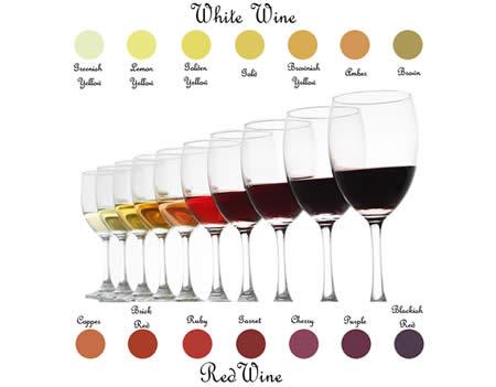 葡萄酒基本