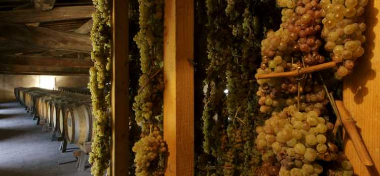 "Vin Santo: the ""holy"" wine"