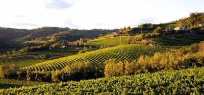 San Floriano del Collio, wine's hill