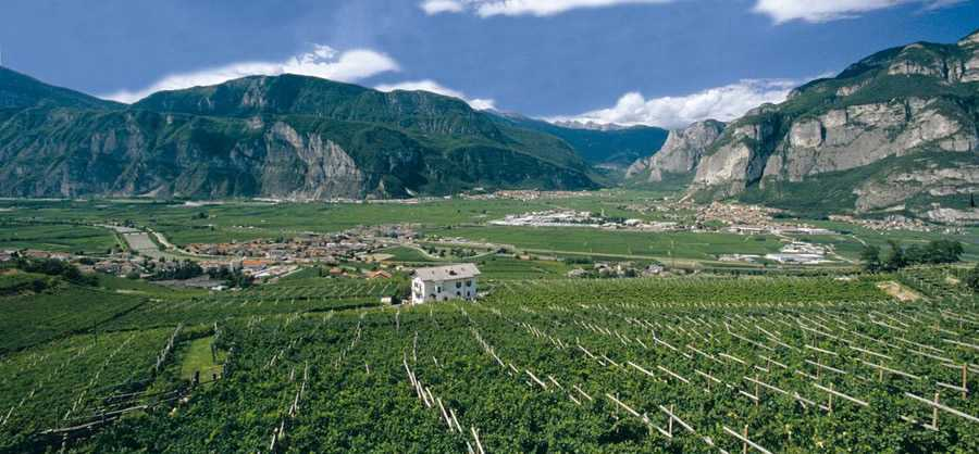 Piana Rotaliana, the garden of vines