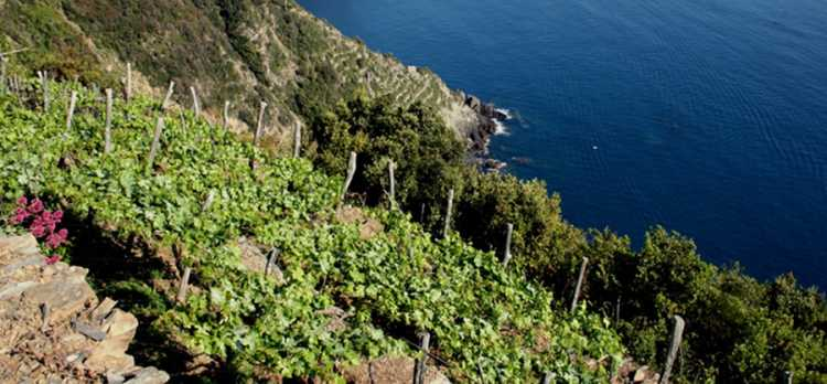 Heroic viticulture: the magic of Cinque Terre